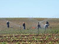 השקיית שדות בדרום / צילום: איל יצהר