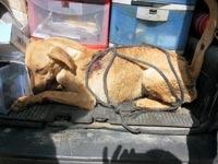 כלב שנגרר במכונית / צילום: פרקליטות מחוז חיפה