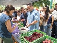 מכירת פירות / צילום: אלון רון