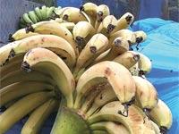 בננות / צילום: יחצ