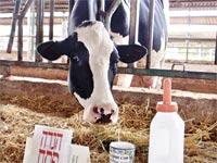 שטיפת החלב