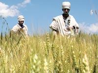 חקלאים באתיופיה  / צילום: רויטרס