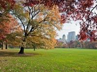 ניו יורק - סנטרל פארק / קרדיט: שאטרסטוק
