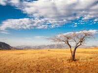 ספארי- קניה / צילום: שאטרסטוק