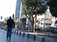 שדרות רוטשילד בתל אביב / צילום: תמר מצפי