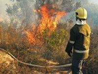 שריפה בכרמל / צילום: בן יוסטר