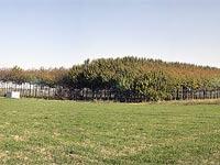 שדות קיבוץ חצור / צילום: אייל פישר