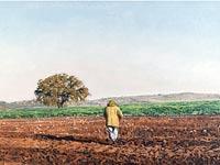 אלי שמיר שותל עם עץ אלון/צילום: אברהם חי