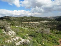 הרי ירושלים / צילום: דב גרינבלט