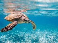 סיישל / צילום:  Shutterstock/ א.ס.א.פ קרייטיב