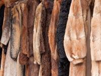 מעיל פרווה / צילום: שאטרסטוק
