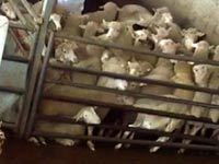 בית המטבחיים דבאח/ צילום:דוברות אנונימוס