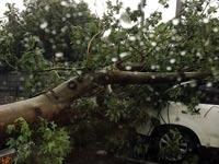 עץ נפל בתל אביב / צילום: גלובס