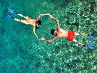צלילה בזנזיבר/ צילום:  Shutterstock/ א.ס.א.פ קרייטיב