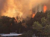 שריפה בחיפה / צילום:יקולאי קדוש
