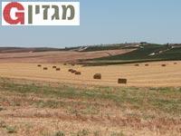 הנופים החקלאיים בבית גוברין/ צילום: אולי גנוסר ורשות הטבע והגנים