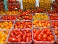 עגבניות שרי/ צילום: תמר מצפי