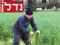 חקלאי בכפר ביאליק / צילום: שלמה אברמוביץ'