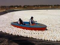 סירה שטה על הכדורים הצפים – מקורות / צילום: אלון שפיגנר