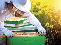כוורת הדבורים / צילום: Shutterstock/ א.ס.א.פ קרייטיב