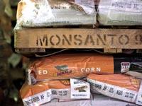 מוצרים של מונסנטו. ניסתה בעבר בעצמה לרכוש את יצרנית קוטלי החרקים סינג'נטה / צילום: בלומברג