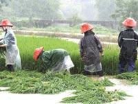 חקלאים סינים/ צילום: רויטרס