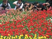 יריד פרחים בהונג קונג / צילום: רויטרס