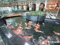 נמל התעופה צ'אנגי בסינגפור/ צילום: אתר נמל התעופה