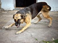 תביעה עם שיניים / צילום: Shutterstock א.ס.א.פ קרייטיב