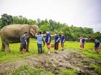 שמורת הפילים בצפון תאילנד / צילום: גיא יחיאלי