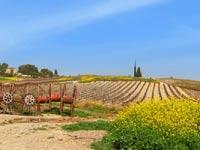 שטח חקלאי / צילום:  Shutterstock/ א.ס.א.פ קרייטיב