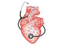 לב / איור: Shutterstock/ א.ס.א.פ קרייטיב