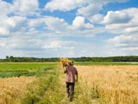 קרקעות חקלאיות ג'י גרופ / צילום: Shutterstock/ א.ס.א.פ קרייטיב