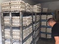 ביצים מזוייפות נתפסו בבית חנינה / צילום: המועצה לענף הלול