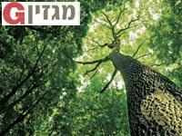 עץ הדעת / צילום: Shutterstock א.ס.א.פ קריאייטיב