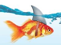 דג הזהב המזויף / איור: Shutterstock