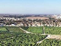 """הקרקע המתוכננת / צילום: רמ""""י ומשרד יער–קורין"""