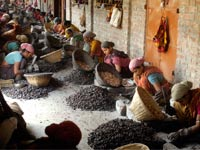 נשים בהודו ממיינות אגוזי קשיו  / צילום: רויטרס  Jayanta Dey