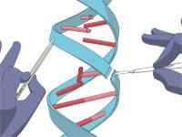 DNA, גנים / איור: Shutterstock