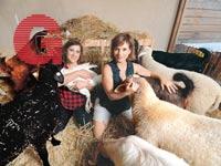 סופרות כבשים / צילום: איל יצהר