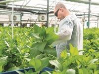 """גידול טבק מהונדס גנטית של קולפלנט והמנכ""""ל, יחיאל טל / צילום: יחצ"""