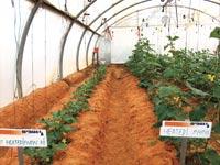 """מערכת חימום וקירור שורשי צמחים של חברת רוטס  / צילום: יח""""צ"""