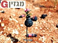 פרחים בתוך רימוני עשן / צילום: רויטרס