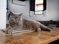 חתולה שמנה/צילום:איל יצהר