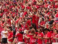 אוהדי כדורגל / צילום: שאטרסטוק