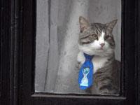 החתול מיצ'י של ג'וליאן אסאנג' / צילום: רויטרס - Toby-Melville