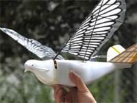 רחפן בילוש בצורת ציפור / צילום: צילום מסך