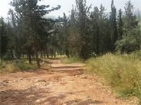 יער ירושלים / צילום: איל יצהר