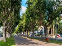 עצים בתל אביב / צילום: שאטרסטוק
