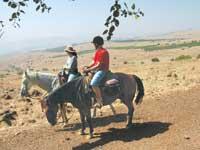 טיול סוסים מחוות ורד הגליל / צילום:אורלי גנוסר